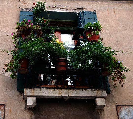 humanite--biodiversite-, balcon a- Venise.jpg