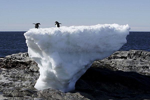 987414_1_0618-antarctica-penguins_standard