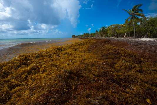 GUADELOUPE-FRANCE-ENVIRONMENT
